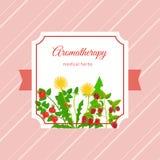 Conception médicale de label d'herbes d'aromatherapy Image libre de droits