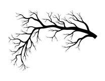 Conception nue d'hiver de branche d'isolement sur le fond blanc illustration de vecteur