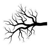 Conception nue d'hiver de branche d'isolement sur le fond blanc illustration libre de droits