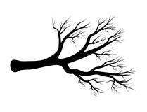 Conception nue d'icône de symbole de vecteur de branche La belle illustration est illustration de vecteur