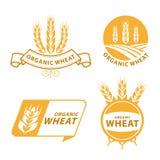 Conception organique de vecteur de signe de bannière de nourriture de produits de grain de riz de Paddy Wheat Photos stock