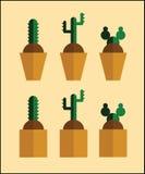 Conception plate de cactus pour vous Photographie stock libre de droits