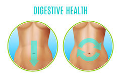Conception réaliste de santé digestive illustration stock