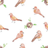 Conception sans couture d'oiseaux et de nids de modèle d'aquarelle sur le fond blanc Photo libre de droits