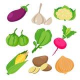 Conception végétale de collection de vecteur illustration libre de droits