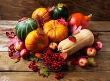 Concepto abundante de la cosecha con las calabazas, las manzanas y las bayas Imagen de archivo libre de regalías