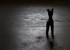Concepto ambiental: ciervos sin hogar Fotos de archivo