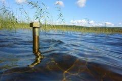 Concepto ambiental: una nuez grande en un lago Imágenes de archivo libres de regalías