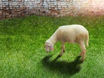 Concepto animal soporte blanco del cordero en la hierba verde fotos de archivo libres de regalías