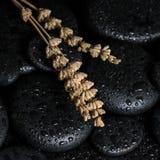 Concepto aromático del balneario de lavandas secadas en ston negro del basalto del zen Foto de archivo