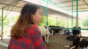 Concepto asiático hermoso del mujer o granjero con y vacas en establo en la lechería granja-que cultiva, y de la cría de animales almacen de metraje de vídeo