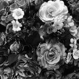 Concepto blanco y negro del color de Rose imágenes de archivo libres de regalías