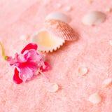 Concepto blando del balneario con el fucsia rosado de la flor, conchas marinas en delica Imagen de archivo