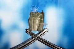 Concepto con la bifurcación y el elefante en el fondo V de la fantasía Foto de archivo libre de regalías