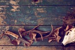 Concepto con las astas, cuchillo, cráneo de la caza fotos de archivo