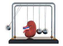 Concepto crónico de la enfermedad de riñón La cuna de Newton con el riñón representación 3d ilustración del vector