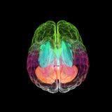 Concepto creativo de un cerebro humano Fotos de archivo libres de regalías