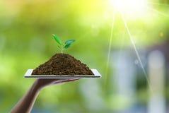 Concepto de ahorro de la energía con tierra verde y el plantación de árboles en las manos de los voluntarios imagenes de archivo
