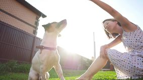 Concepto de amistad y de animales dom?sticos Mujer joven feliz y perro que se divierten en la hierba metrajes