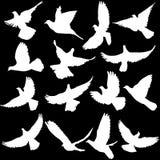 Concepto de amor o de paz Sistema de siluetas de palomas Vector IL Fotos de archivo libres de regalías