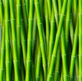 Concepto de bambú del fondo Ilustración del vector Fotografía de archivo libre de regalías