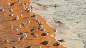 Concepto de Birding Muchas gaviotas en la playa arenosa almacen de video