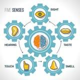 Concepto de cinco sentidos Foto de archivo libre de regalías