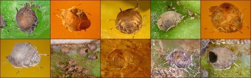 Concepto de control biológico foto de archivo libre de regalías