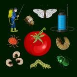 Concepto de control de parásito libre illustration