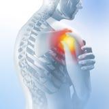 Concepto de dolor del hombro Transparencia del esqueleto y del cuerpo ejemplo anatómico médico 3d Imágenes de archivo libres de regalías