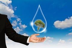Concepto de Eco: Gota y árbol del agua del asimiento de la mano Fotografía de archivo