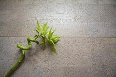 Concepto de Eco: piedra con el espacio de bambú y grande de la copia Imagen de archivo