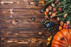 Concepto de Halloween con las calabazas, las arañas y los insectos frescos con las flores Opinión del truco o de invitación desde Foto de archivo libre de regalías