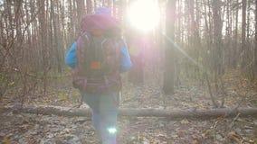 Concepto de invierno, de viaje del otoño y de caminar Mujer joven del caminante que camina afuera en un bosque del otoño almacen de video