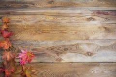 Concepto de la acción de gracias con las hojas de arce coloridas de la caída en de madera Imagenes de archivo