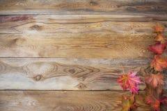 Concepto de la acción de gracias con las hojas de arce de la caída en backgroun de madera Fotos de archivo