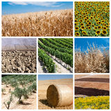 Concepto de la agricultura Foto de archivo libre de regalías