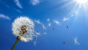 Concepto de la alergia en primavera imagen de archivo libre de regalías