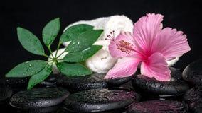 Concepto de la atención sanitaria del hibisco rosado, shefler verde de la hoja con dro Fotos de archivo libres de regalías