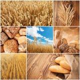Concepto de la cosecha del trigo Imágenes de archivo libres de regalías