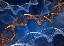 Concepto de la DNA Imágenes de archivo libres de regalías