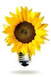 Concepto de la energía renovable con el girasol Imagen de archivo libre de regalías