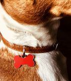 Concepto de la etiqueta del nombre de Jack Russel Terrier Imagen de archivo libre de regalías