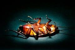 Concepto de la exterminación de la cucaracha Imagen de archivo