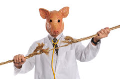 Concepto de la gripe de los cerdos foto de archivo