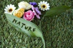 Concepto de la hoja de la naturaleza Foto de archivo libre de regalías