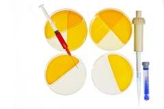 Concepto de la investigación médica de los platos de Petri Fotografía de archivo libre de regalías