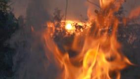 Concepto de la llama del fuego de la cámara lenta almacen de metraje de vídeo