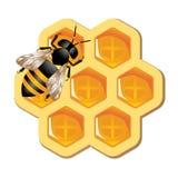 Concepto de la miel Fotos de archivo