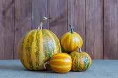 Concepto de la naturaleza del otoño Fruta y verdura de la caída Fotos de archivo libres de regalías
